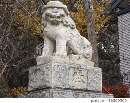 検見川浅間神社の石作りの狛犬 36860500