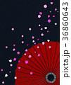 和モダンなイラスト(和傘、黒、桜) 36860643