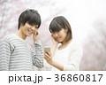 桜の前で音楽を聴くカップル 36860817