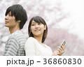 桜の前で音楽を聴くカップル 36860830