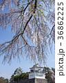 名古屋都市風景・春の名古屋城 36862225
