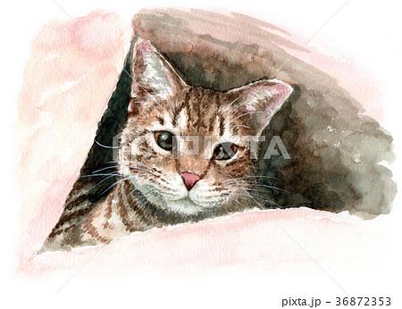 水彩で描いた布団の中から顔を出す猫 36872353