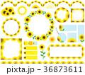 フレーム ひまわり 植物のイラスト 36873611