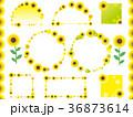 フレーム ひまわり 植物のイラスト 36873614