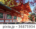 氷川神社楼門と紅葉 36875934