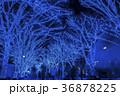 青の洞窟 SHIBUYA 36878225