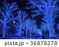 青の洞窟 SHIBUYA 36878278