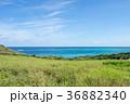 石垣島 平久保 海の写真 36882340