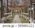諏訪神社 神社 境内の写真 36884121