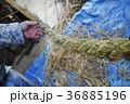 注連縄作り 注連縄 職人 男性 日本人 正月 飾り 神道 稲 藁 締める 編む 新年  36885196