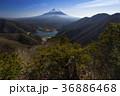 富士山 精進湖 山梨県の写真 36886468