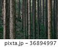 木々 森 森林の写真 36894997