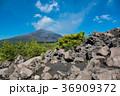 鹿児島 桜島の噴煙 有村溶岩展望所 36909372