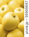 りんご 林檎 フルーツの写真 36909697