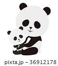パンダ ジャイアントパンダ 動物のイラスト 36912178