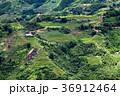 bright green rice fields around Cat Cat village 36912464