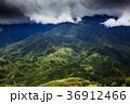 bright green rice fields around Cat Cat village 36912466