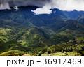bright green rice fields around Cat Cat village 36912469