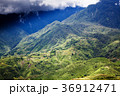 bright green rice fields around Cat Cat village 36912471