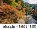紅葉 高尾山 清滝川の写真 36914365