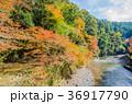紅葉 高尾山 山の写真 36917790