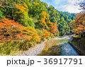 紅葉 高尾山 山の写真 36917791