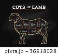ラム肉 黒板 構えるのイラスト 36918028