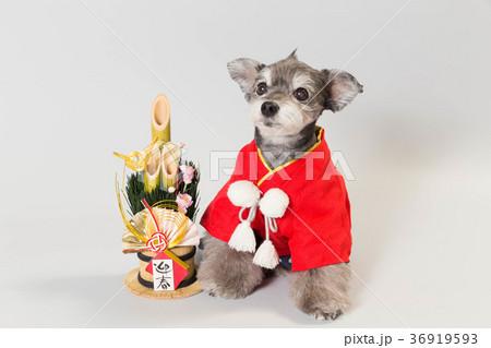 門松と犬 36919593