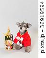 門松と犬 36919594