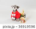 門松と犬 36919596