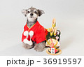 門松と犬 36919597