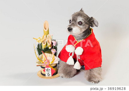 門松と犬 36919628