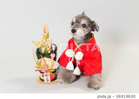 門松と犬 36919630
