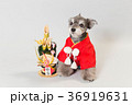 門松と犬 36919631