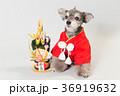 犬 門松 正月の写真 36919632