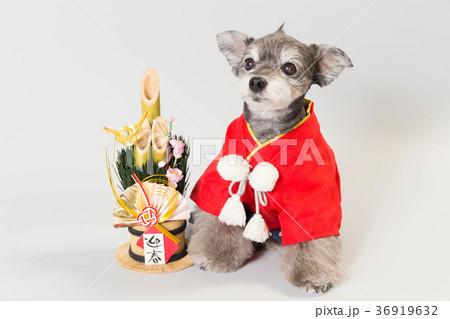 門松と犬 36919632