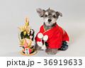 門松と犬 36919633