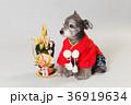 門松と犬 36919634