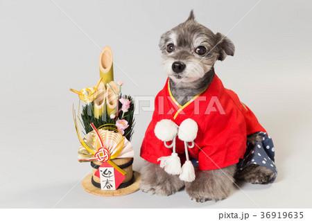 門松と犬 36919635