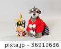 門松と犬 36919636