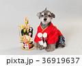 門松と犬 36919637