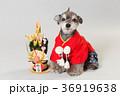 門松と犬 36919638