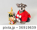 門松と犬 36919639