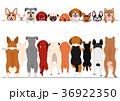 立ち上がった小型犬たちのボーダーのセット 36922350