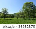 居谷里 居谷里湿原 初夏の写真 36932375