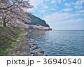花 桜 ソメイヨシノの写真 36940540