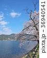 花 桜 ソメイヨシノの写真 36940541