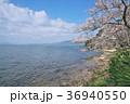 花 桜 ソメイヨシノの写真 36940550