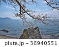 花 桜 ソメイヨシノの写真 36940551
