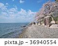 花 桜 ソメイヨシノの写真 36940554